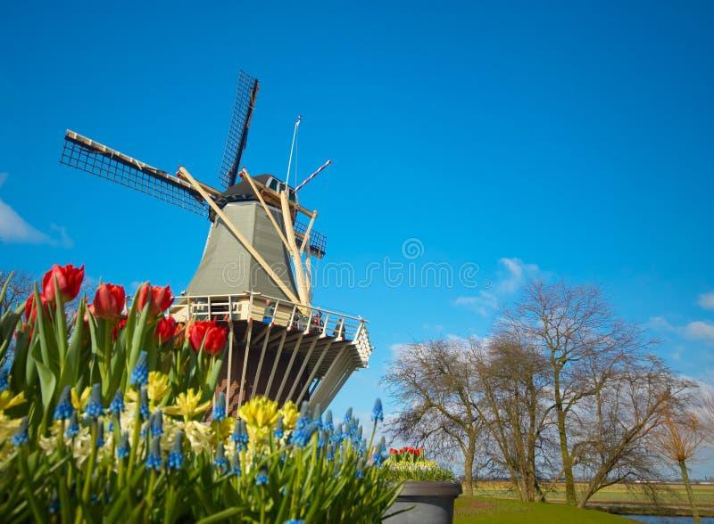 Nederlandse windmolen en tulpen royalty-vrije stock fotografie