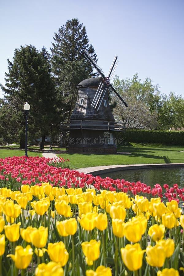 Nederlandse Windmolen met Tulpen stock afbeeldingen