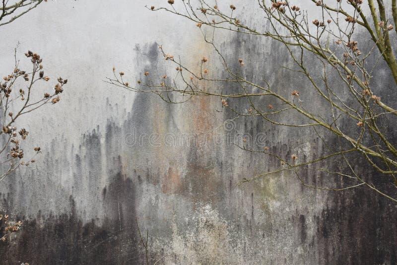 Nedfläckad stuckaturvägg för Grunge med trädfilialer royaltyfri fotografi