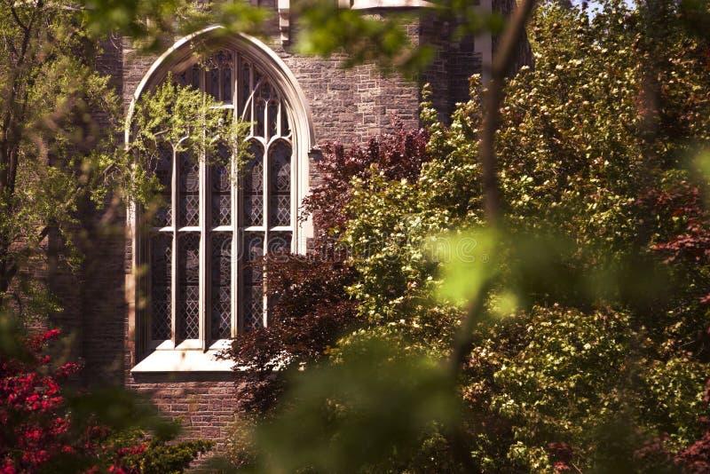 nedfläckadt treesfönster för kyrkligt exponeringsglas royaltyfria foton