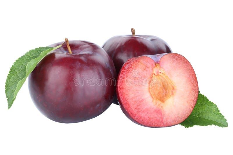 Nedgång för höst för frukt för nya frukter för plommonplommon som blå isoleras på vit arkivfoto