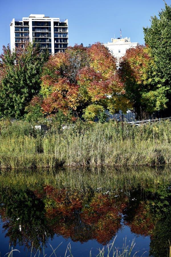 Nedgång Foilage och reflexion på det södra dammet fotografering för bildbyråer