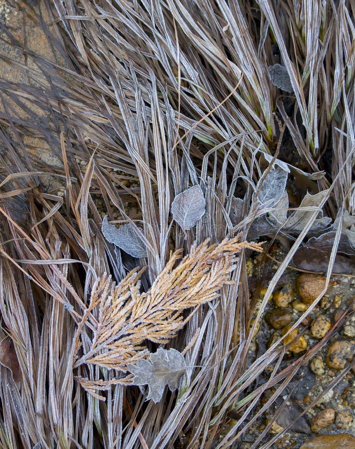 Nedgång glaserade sidor och gräs i den Yosemite nationalparken Califo royaltyfri foto