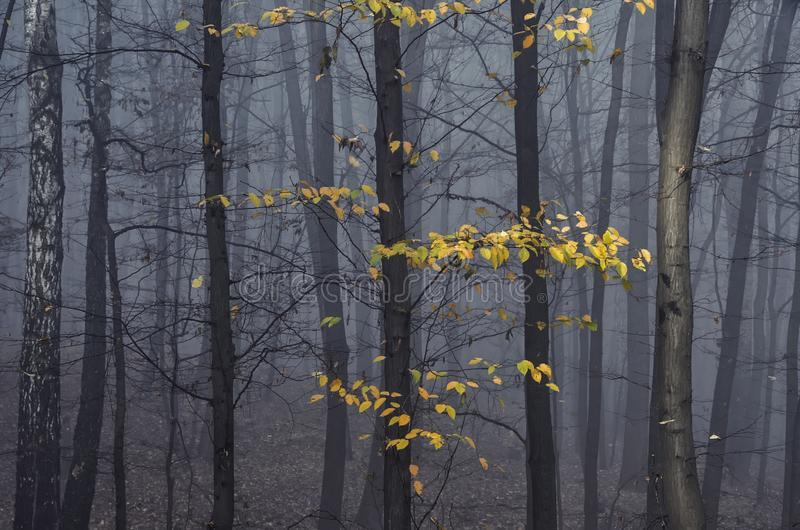 Nedgång i den dimmiga skogen royaltyfria foton