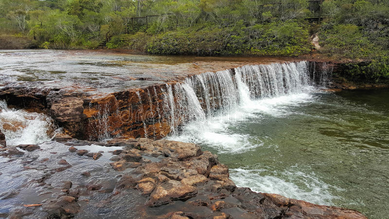 Nedgångar för fruktslagträ är i det avlägsna området av norr Queensland royaltyfria foton