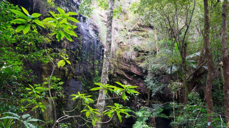 Nedgångar för Springbrook nationalparkkortkort arkivbild