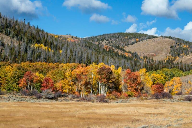 Nedgångaspar av Wyoming arkivfoto