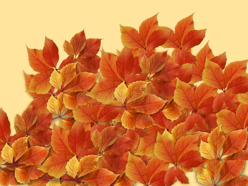 Nedgångbakgrund Färgrika röda och orange höstsidor med suddigt bakgrunds- och kopieringsutrymme för att skriva arkivbild