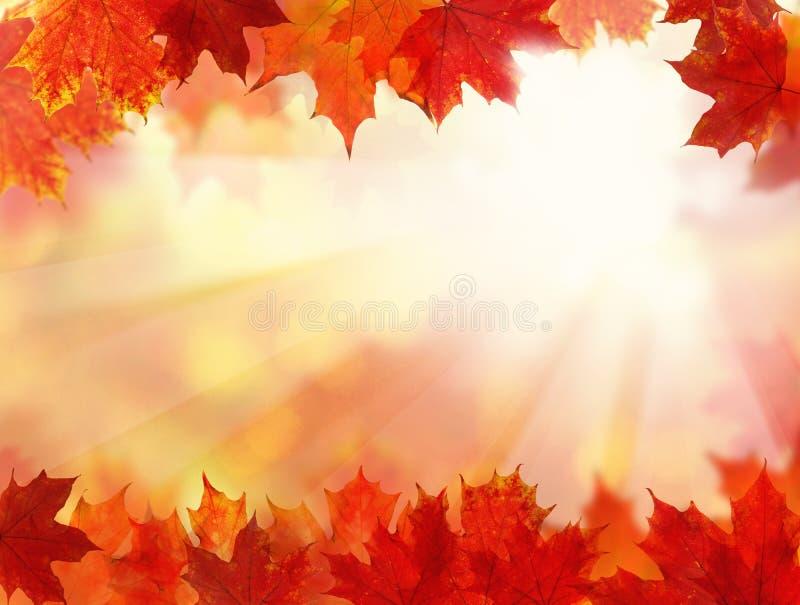 Nedgångbakgrund med Autumn Leaves