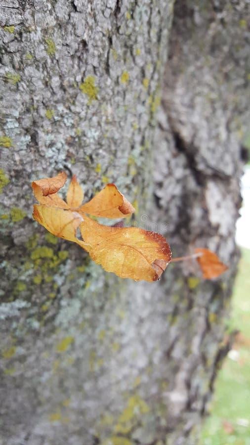 Nedgångblad på trädstammen arkivbilder