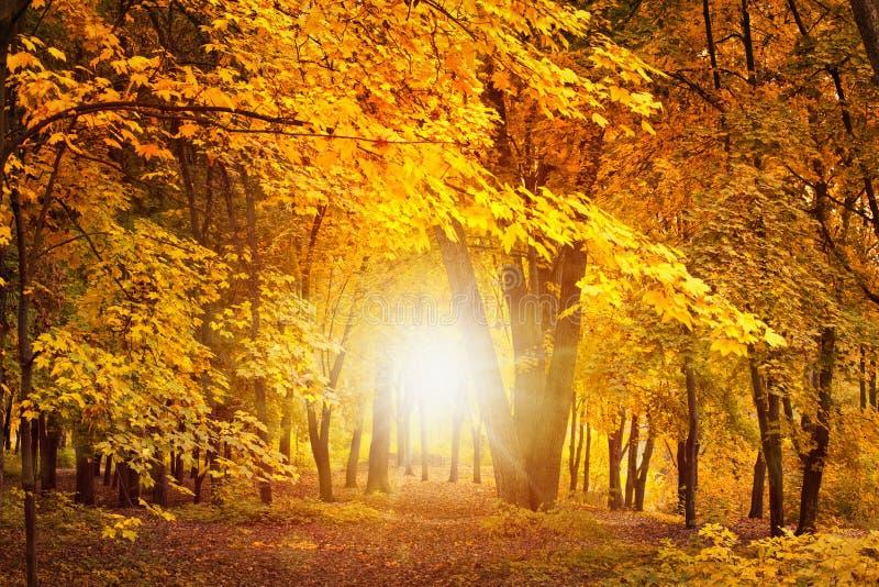 Nedgångdag i skog arkivfoton