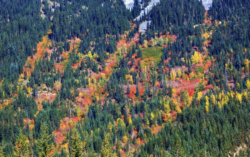 Nedgången färgar bergsidor Forest Stevens Pass Washington royaltyfri fotografi
