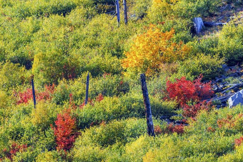 Nedgången färgar bergsidor Forest Stevens Pass Washington arkivbilder