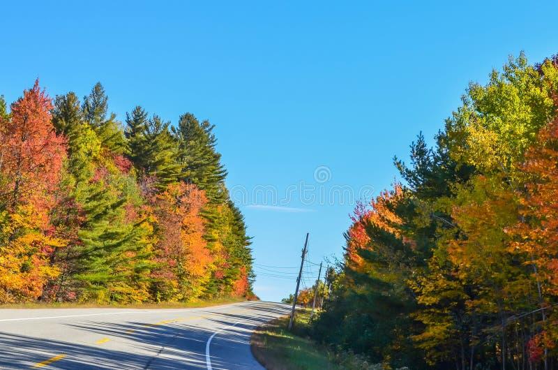 Nedgången färgar på en ensam elasticitet av huvudvägen arkivfoton