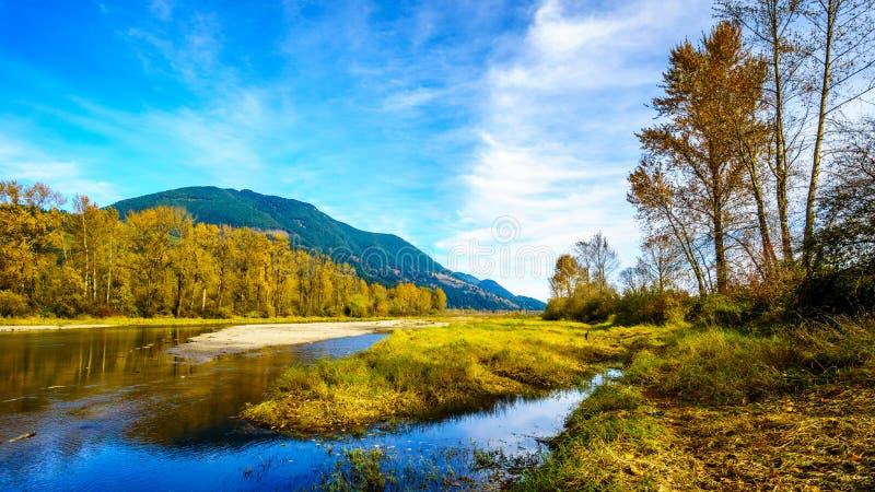Nedgången färgar runt om det Nicomen träsket, en filial av Fraser River, som den flödar till och med Fraser Valley arkivbild