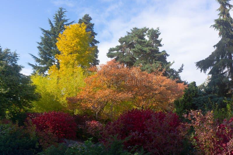 Nedgången färgar träd i botanisk trädgård royaltyfri fotografi