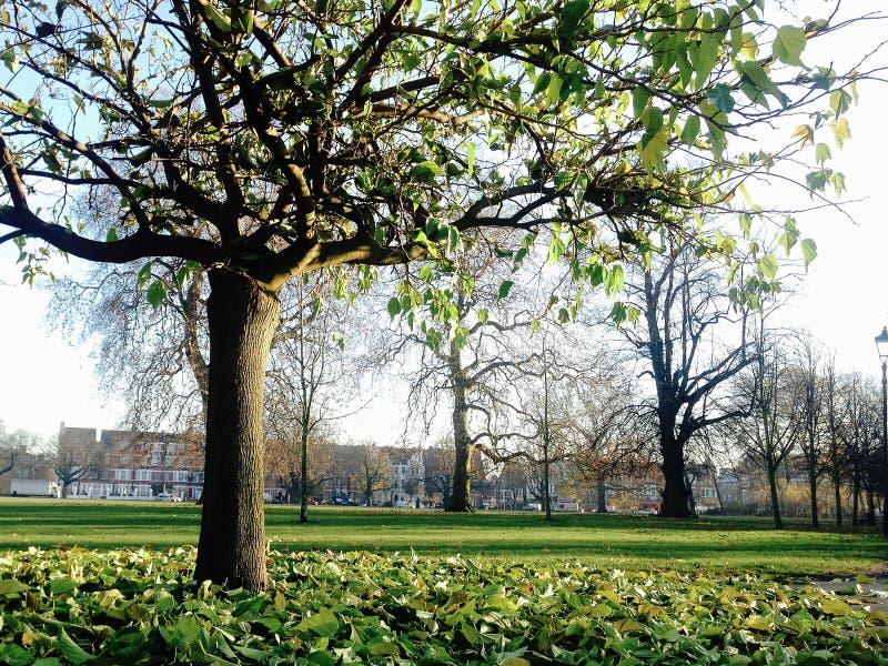 Nedgången/höstsäsongen i den Clapham allmänningen parkerar, London royaltyfria foton