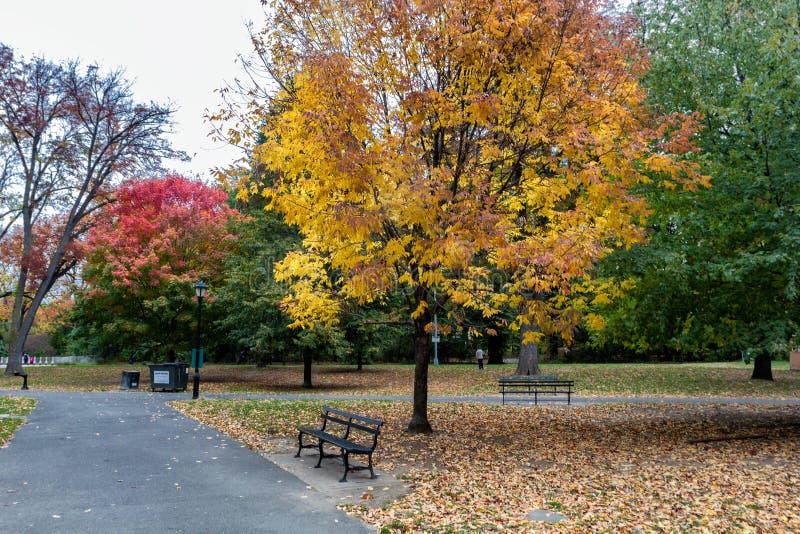Nedgången i utsikt parkerar, Brooklyn med färgrika träd fotografering för bildbyråer