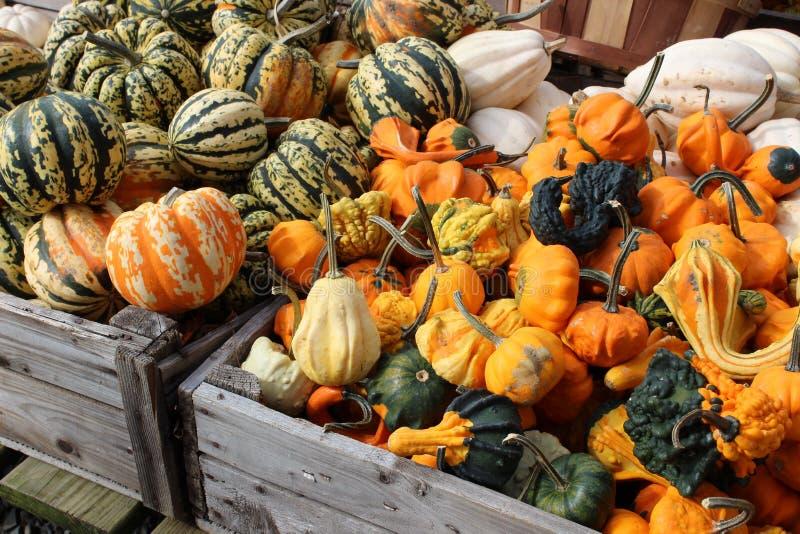 Nedgångens överflöd kan ses i ljust - gröna och orange färgrika pumpor och squash i askar på bönder marknadsför royaltyfri fotografi
