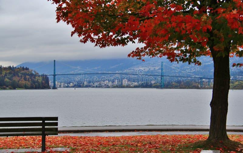 Nedgångfärg, höstsidor, stadslandskap i Stanley Paark, i stadens centrum Vancouver, British Columbia arkivbild