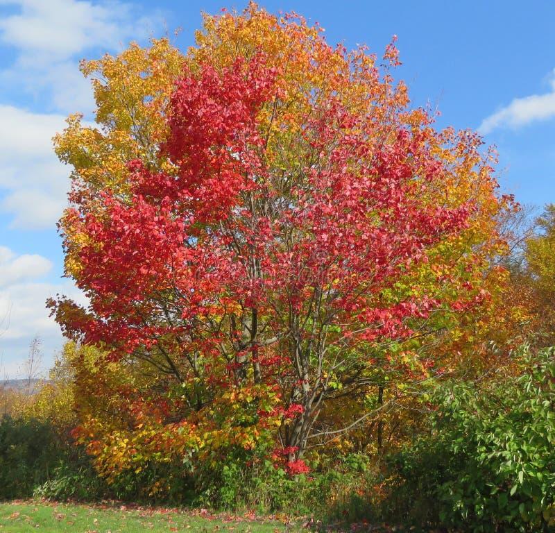Nedgångfärg i Vermont arkivbild