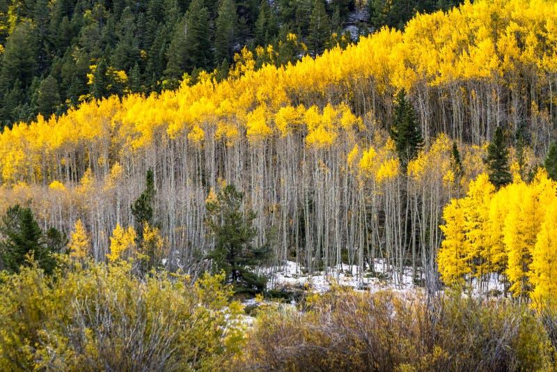 Nedgångfärg och insnöade Colorado royaltyfri foto