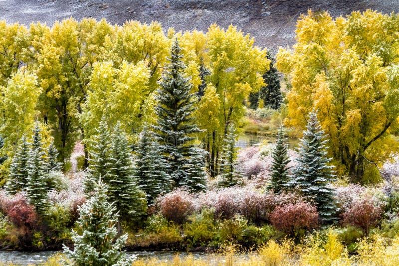 Nedgångfärg och insnöade Colorado arkivbilder