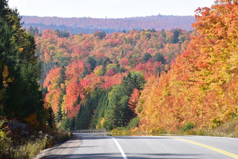 Nedgångfärger i Algonquin parkerar Ontario royaltyfri bild