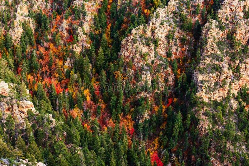 Nedgångfärger i en kanjon på den Mogollon kanten, Arizona arkivfoton