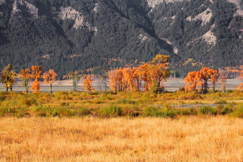 Nedgångfärger i storslagna Tetons royaltyfri foto