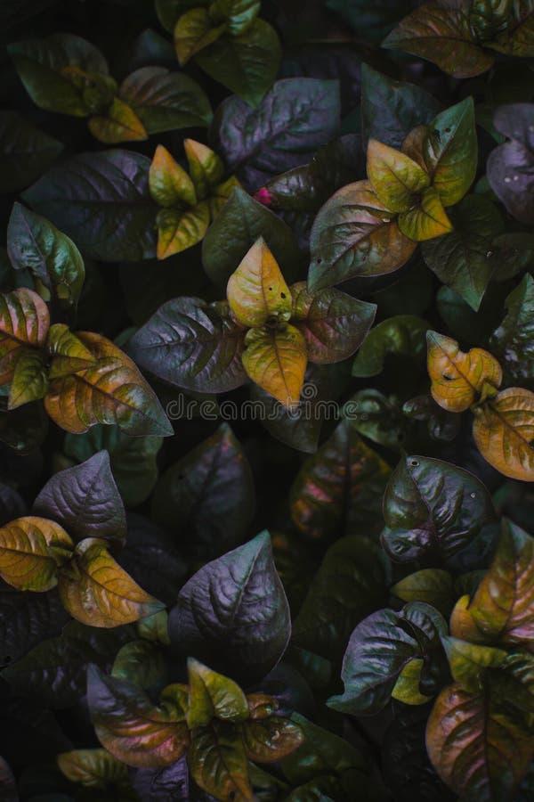Nedgångfärger i vår fotografering för bildbyråer