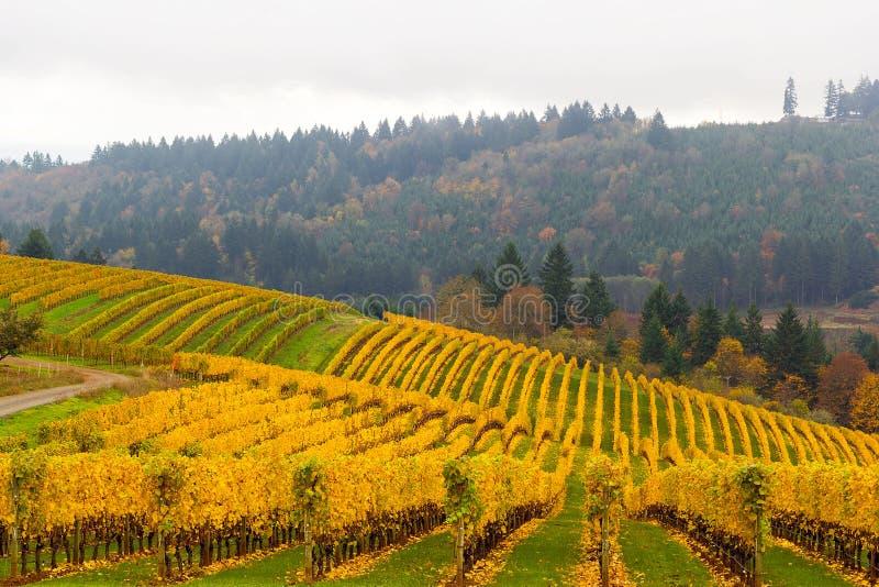 Nedgångfärger på vingården i Dundee Oregon arkivfoto