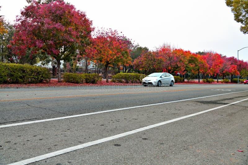 Nedgånglövverk i Cupertino, Kalifornien royaltyfri fotografi