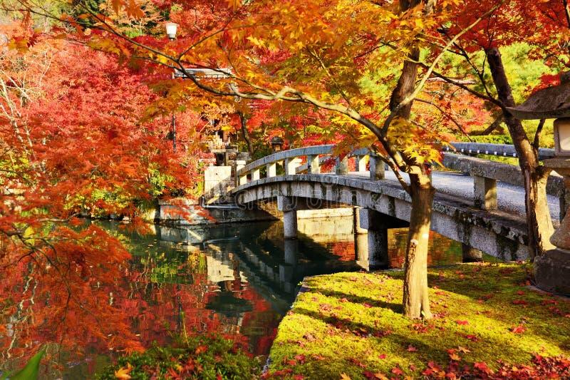 Nedgånglövverk i Kyoto arkivbilder