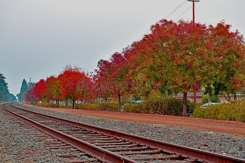 Nedgånglövverk längs järnvägen i Cupertino, Kalifornien arkivfoto
