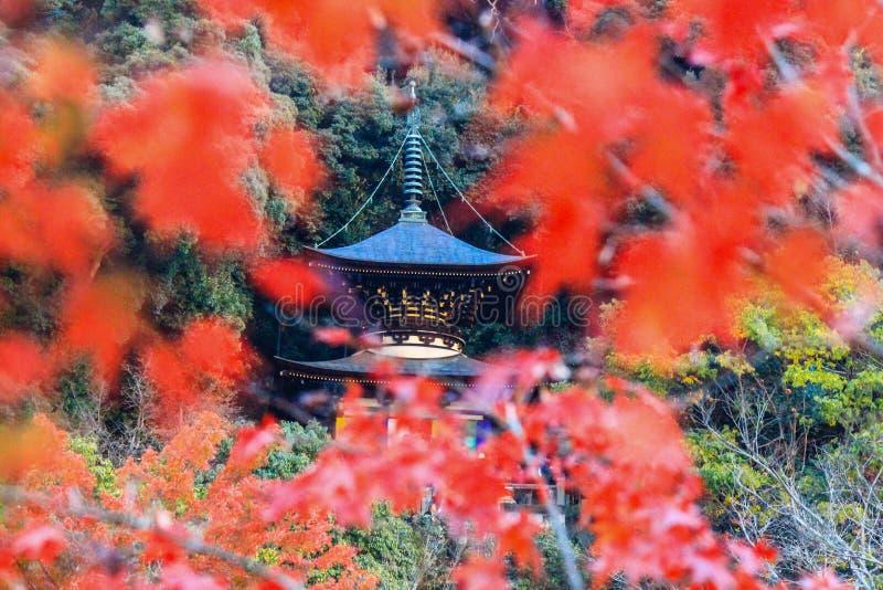 Nedgånglövverk och Tahoto pagod på den Eikando templet, Sakyo-ku, Kyoto, Japan royaltyfri fotografi