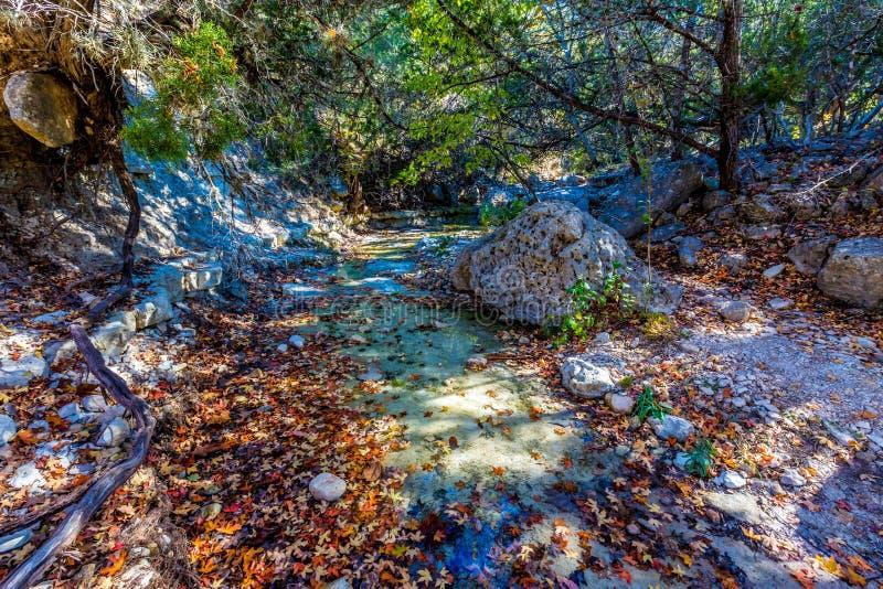 Nedgånglövverk på att bedöva lönnträd, med stort stenblock och frikändvatten i borttappade lönnar royaltyfria foton