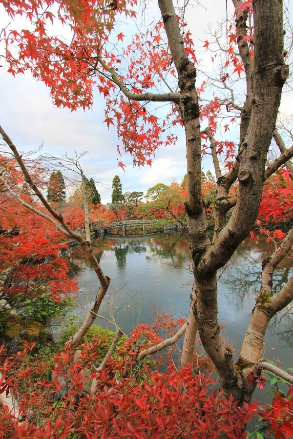 Nedgånglövverk på den Eikando templet (Zenrin-ji), Sakyo-ku, Kyoto, Japan royaltyfria foton