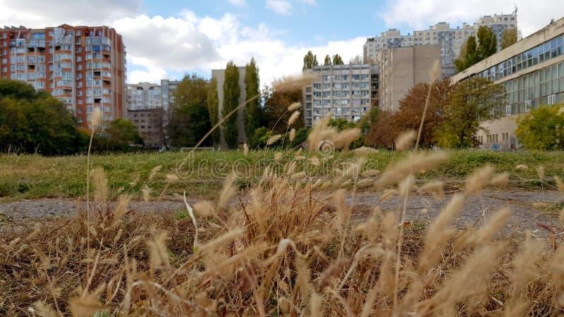 Nedgånglandskap med oskarpa spikelets för grön gräsmatta royaltyfria bilder