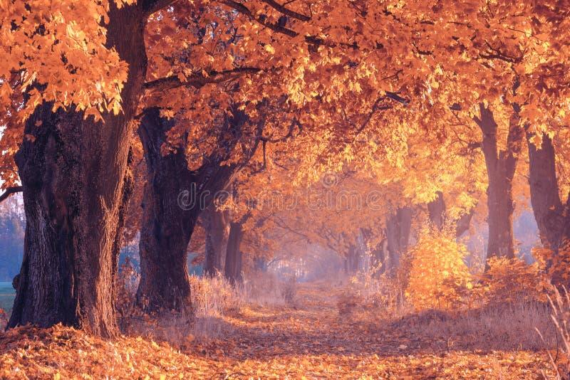 Nedgångplats shadows den blåa långa naturen för hösten skyen yellow för tree för sky för blå molnig fallfältliggande ensam Scenis arkivfoto