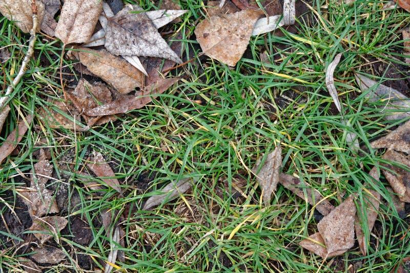Nedgångsidor på fältet för grönt gräs, sikt från över, höstbakgrund royaltyfria foton