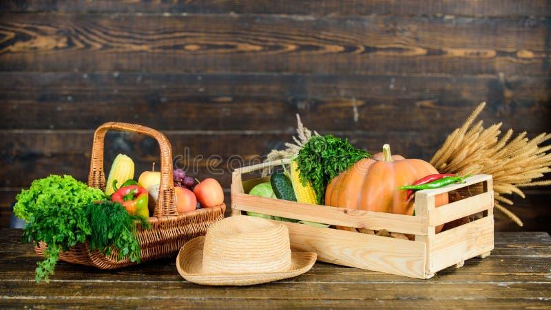 Nedgångskördbegrepp Grönsaker för höstskördskördar Lokalt fullvuxen naturlig mat Fyrkantig sammansättning vibrerande och färgrikt royaltyfria bilder