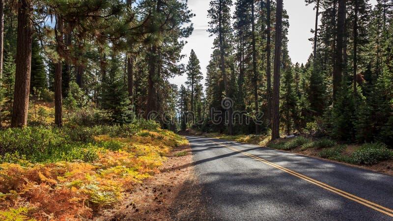 Nedgångskoghuvudväg royaltyfria bilder