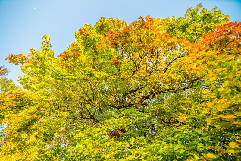 Nedgångskogskönhet royaltyfri fotografi