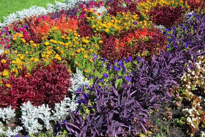 Nedgångväxter för rabatt Färgrik trädgårds- blomsterrabatt i höst Rabattdesign arkivfoto