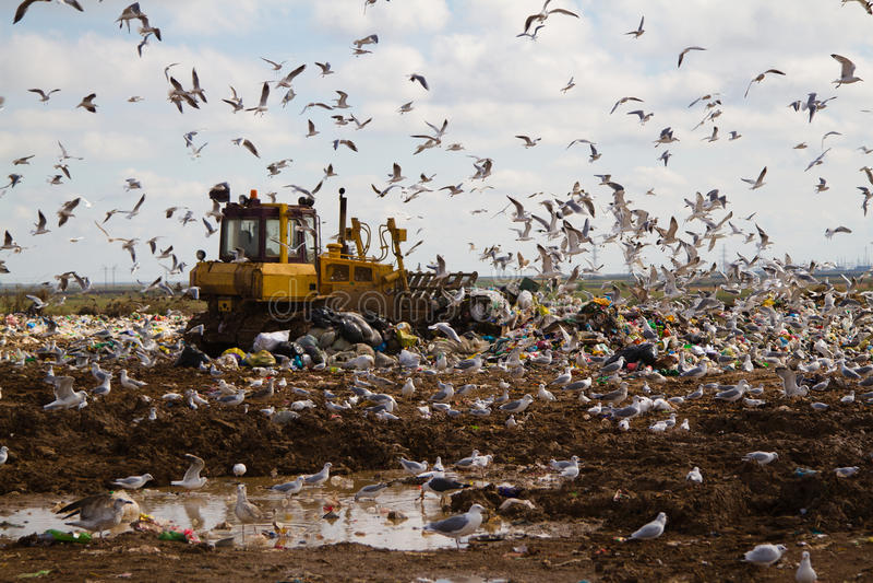 Nedgrävning av sopor rackar ner på bulldozrar som bearbetar avskräde royaltyfria foton