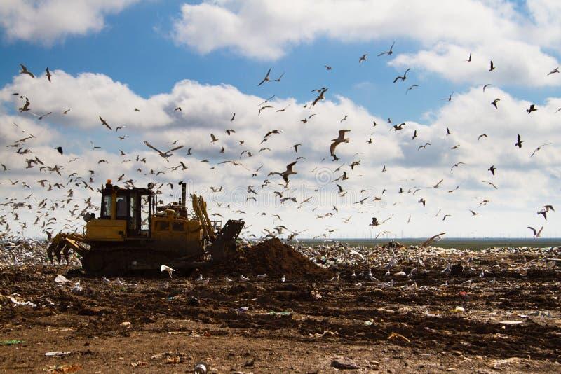 Nedgrävning av sopor rackar ner på bulldozrar som bearbetar avskräde arkivbild