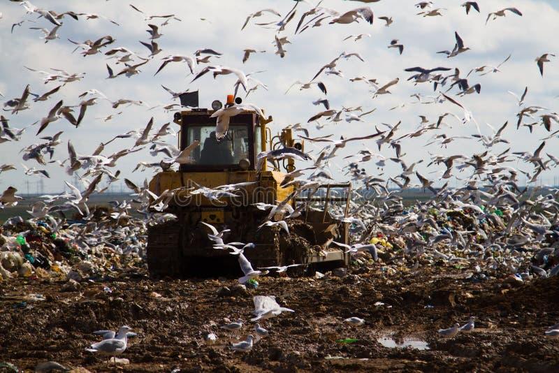 Nedgrävning av sopor rackar ner på bulldozrar som bearbetar avskräde royaltyfri fotografi