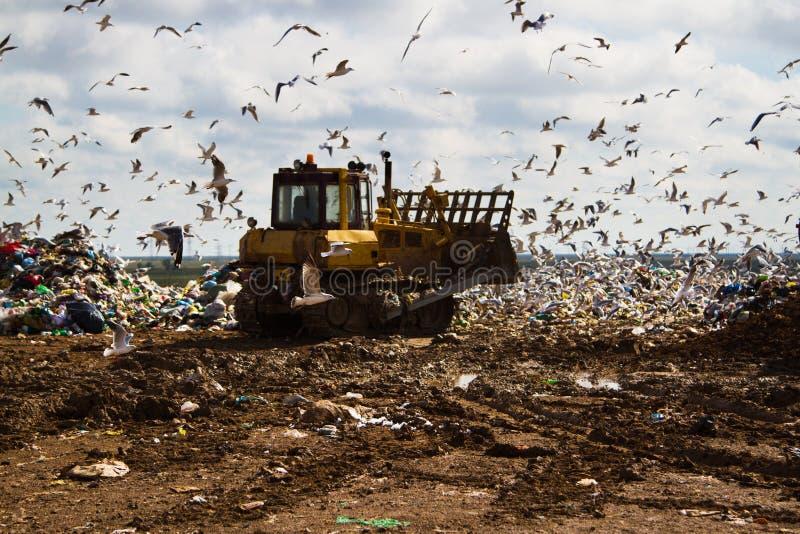 Nedgrävning av sopor rackar ner på bulldozrar som bearbetar avskräde royaltyfri bild