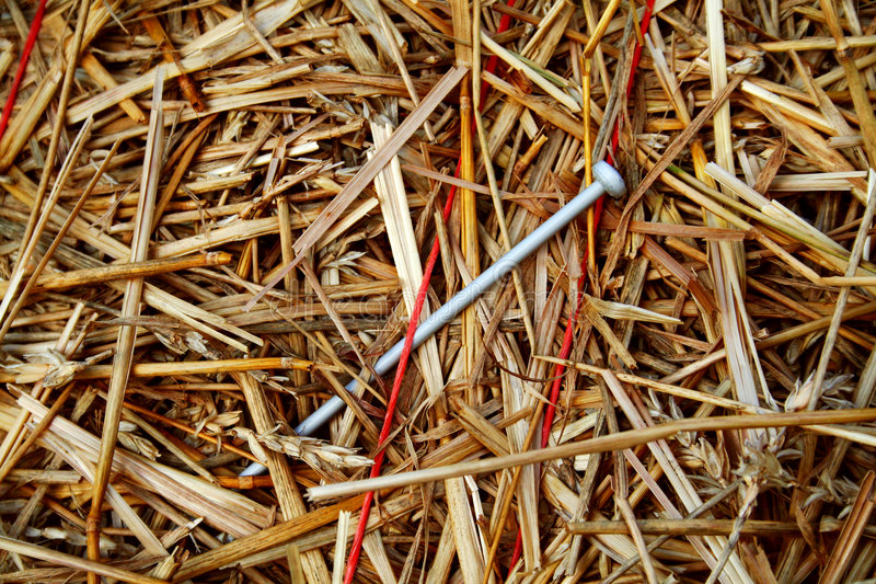Needle in a Haystack 2 royalty free stock images